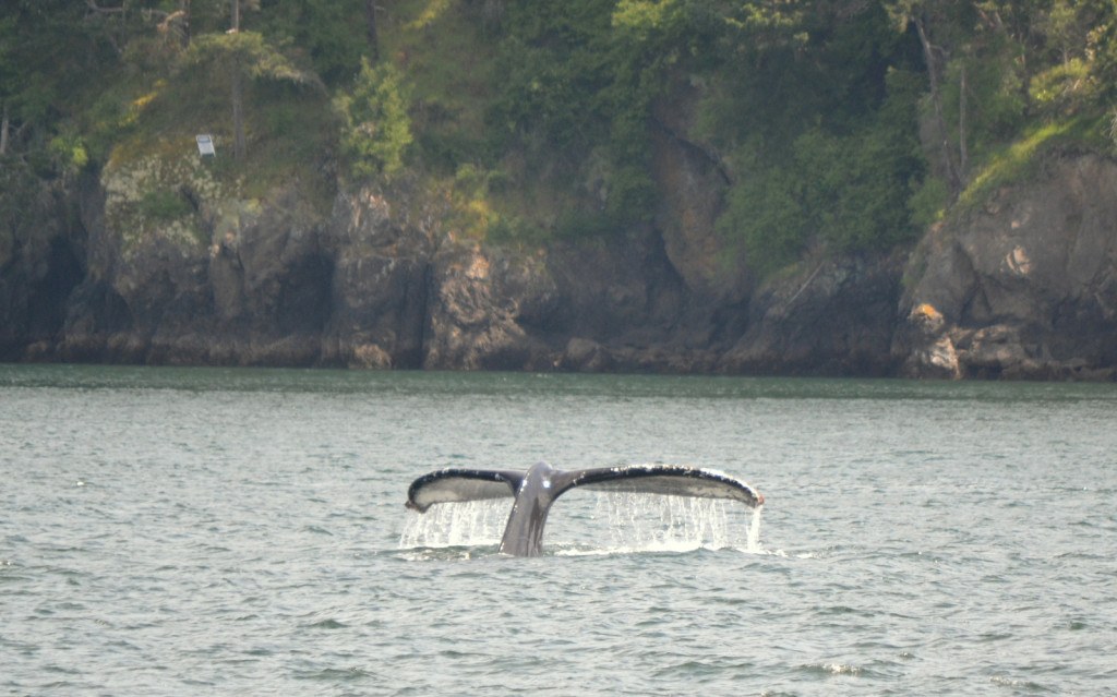Waterfall off the tail of a humpback
