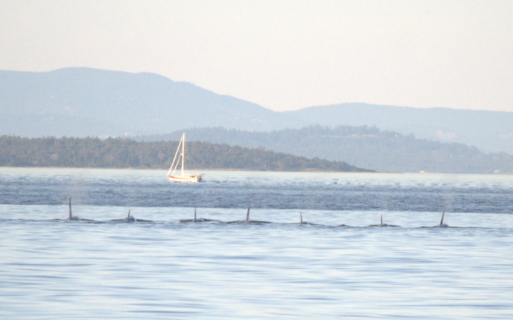 Southern Resident Killer whales sleeping