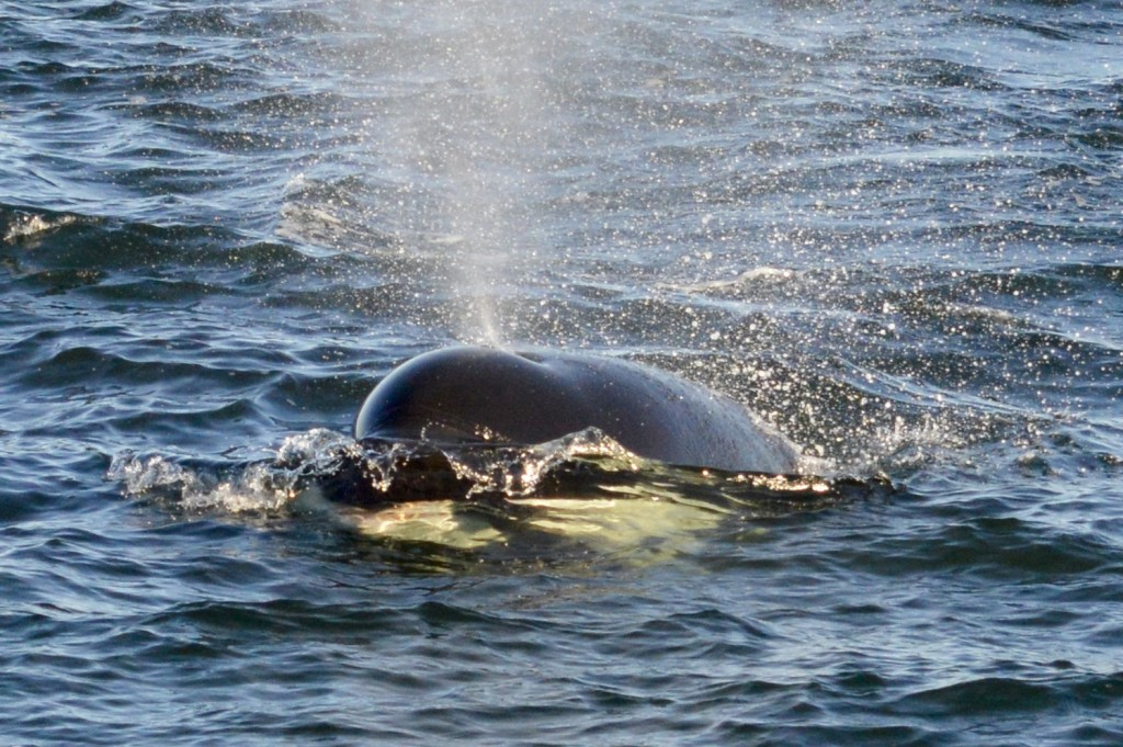 If you look closely, you can see a porpoise under the surface in her mouth!