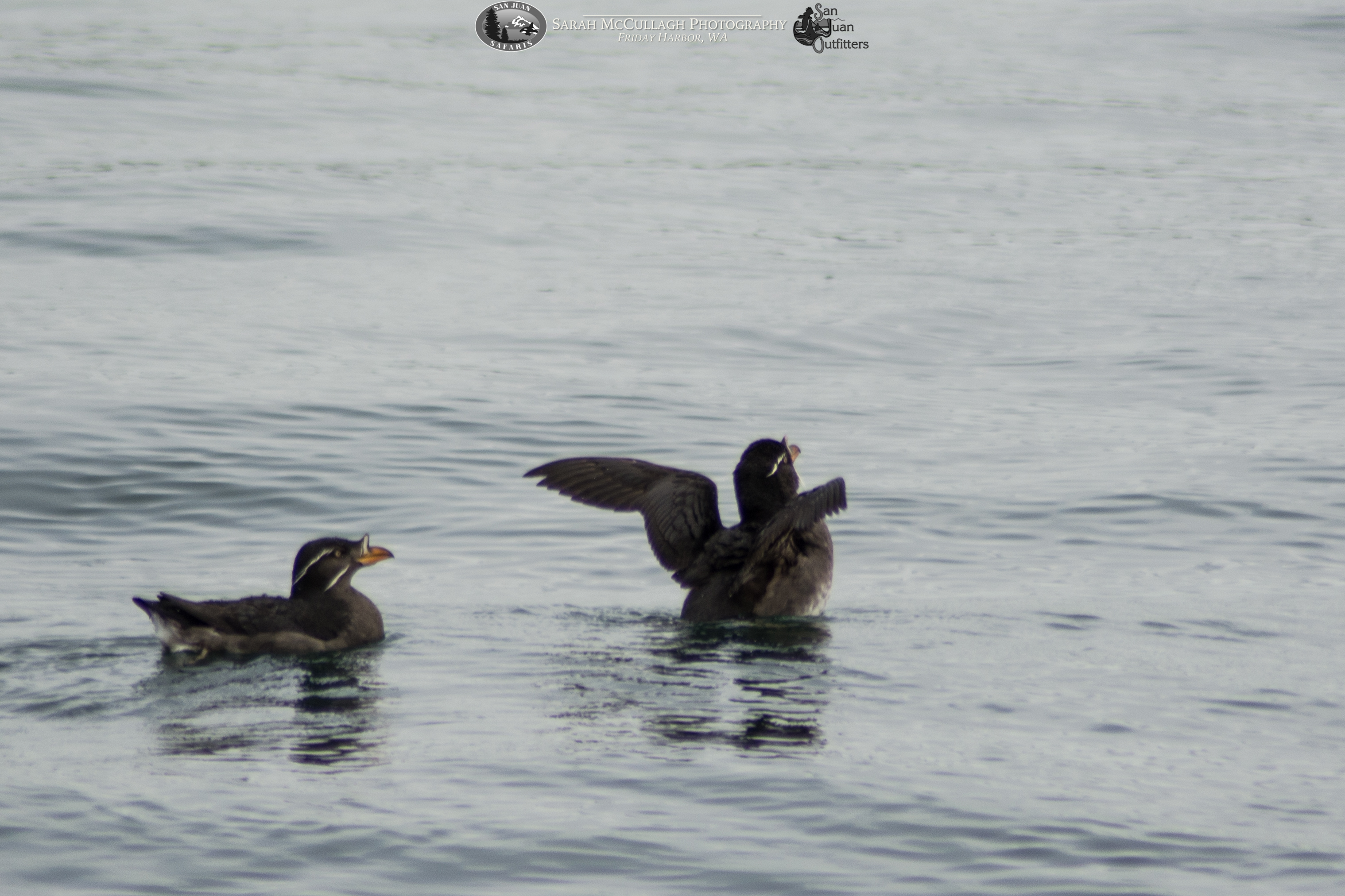 Spring and Summer in the Salish Sea