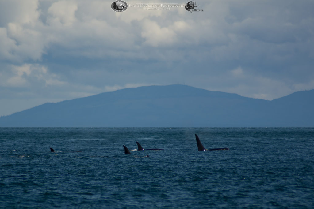 J Pod Southern Resident Killer Whales swimming west