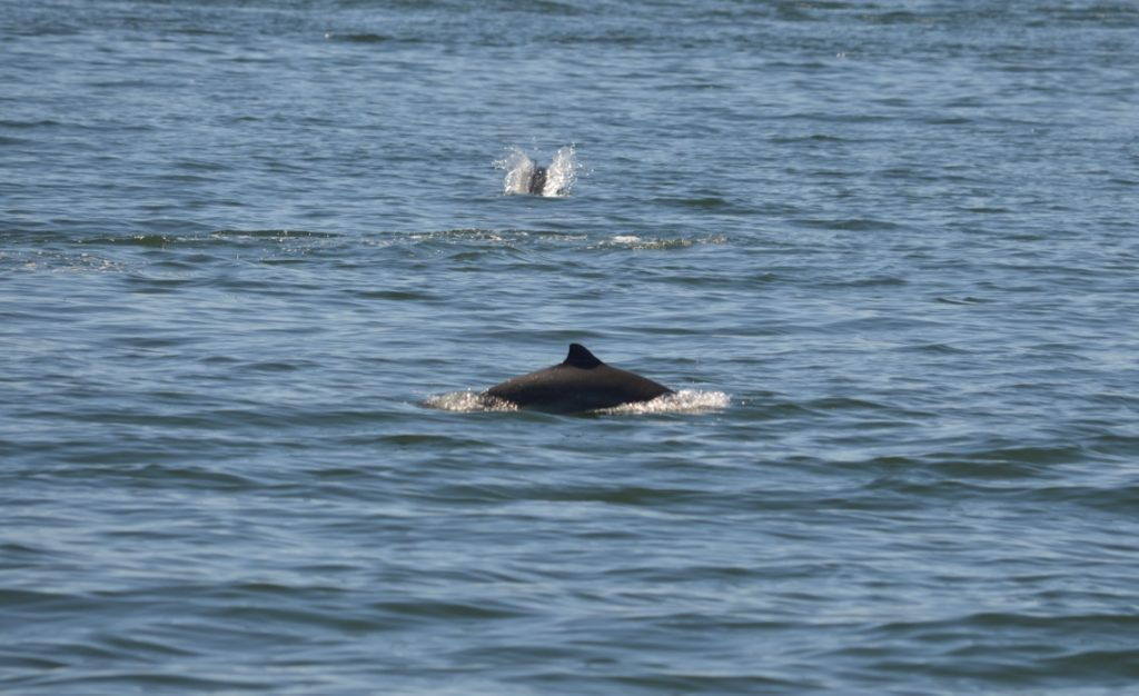 Photos from June 23rd Whale Watch