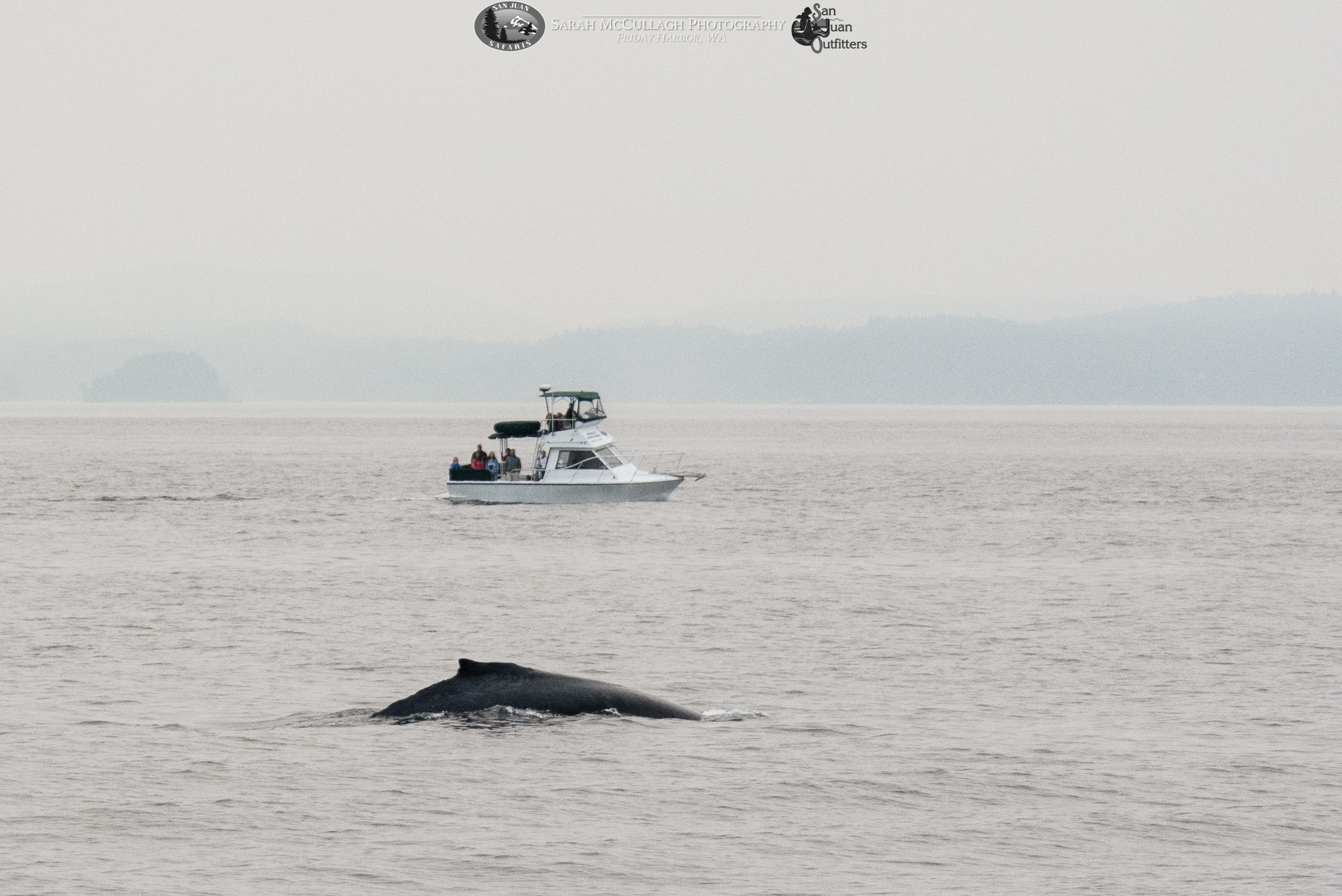 Humpback Whale Spotted on Sunset Whale Watch