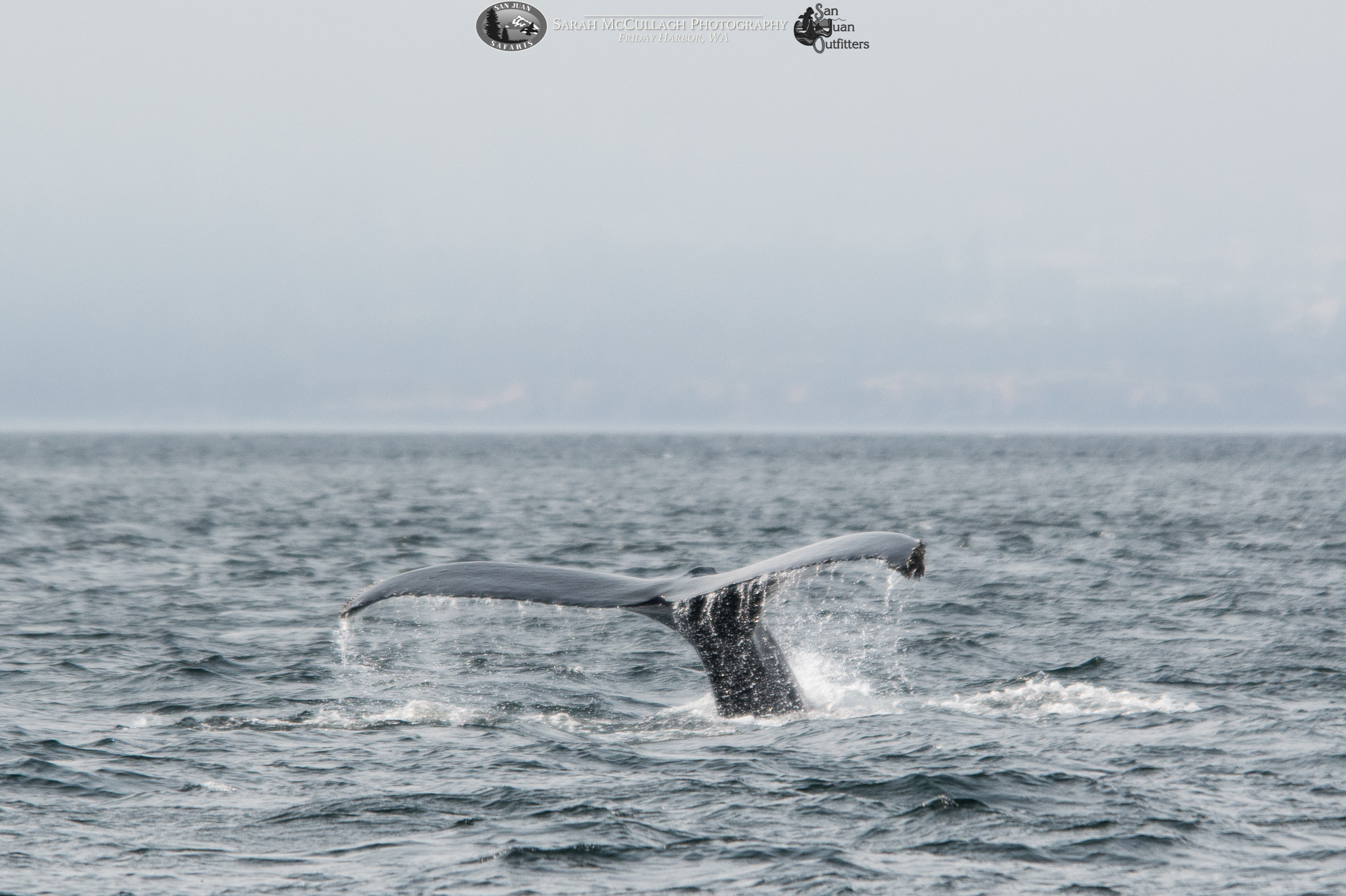A Whale of a Time in the Strait of Juan de Fuca