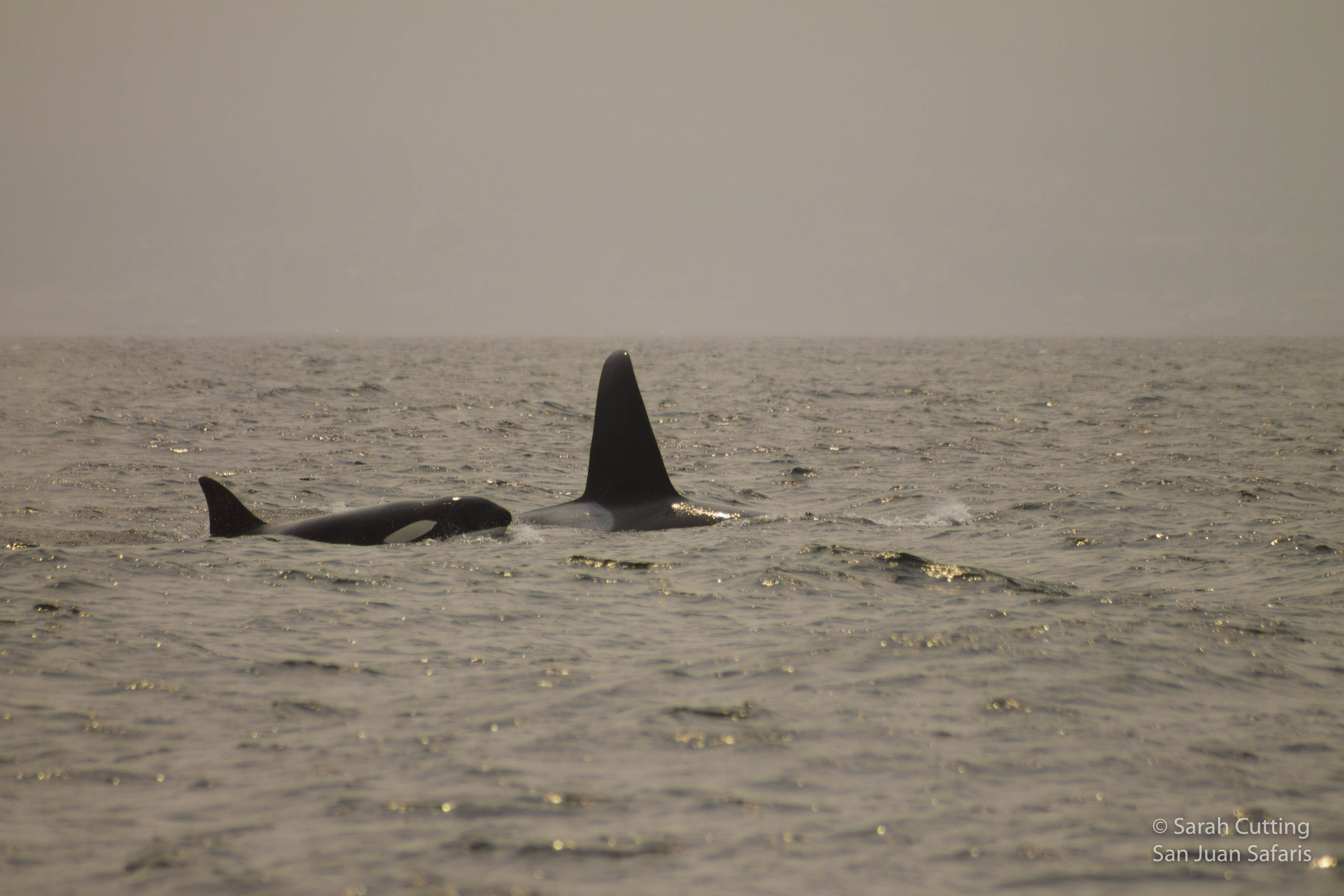 Smoky Skies and Orca-Filled Waters