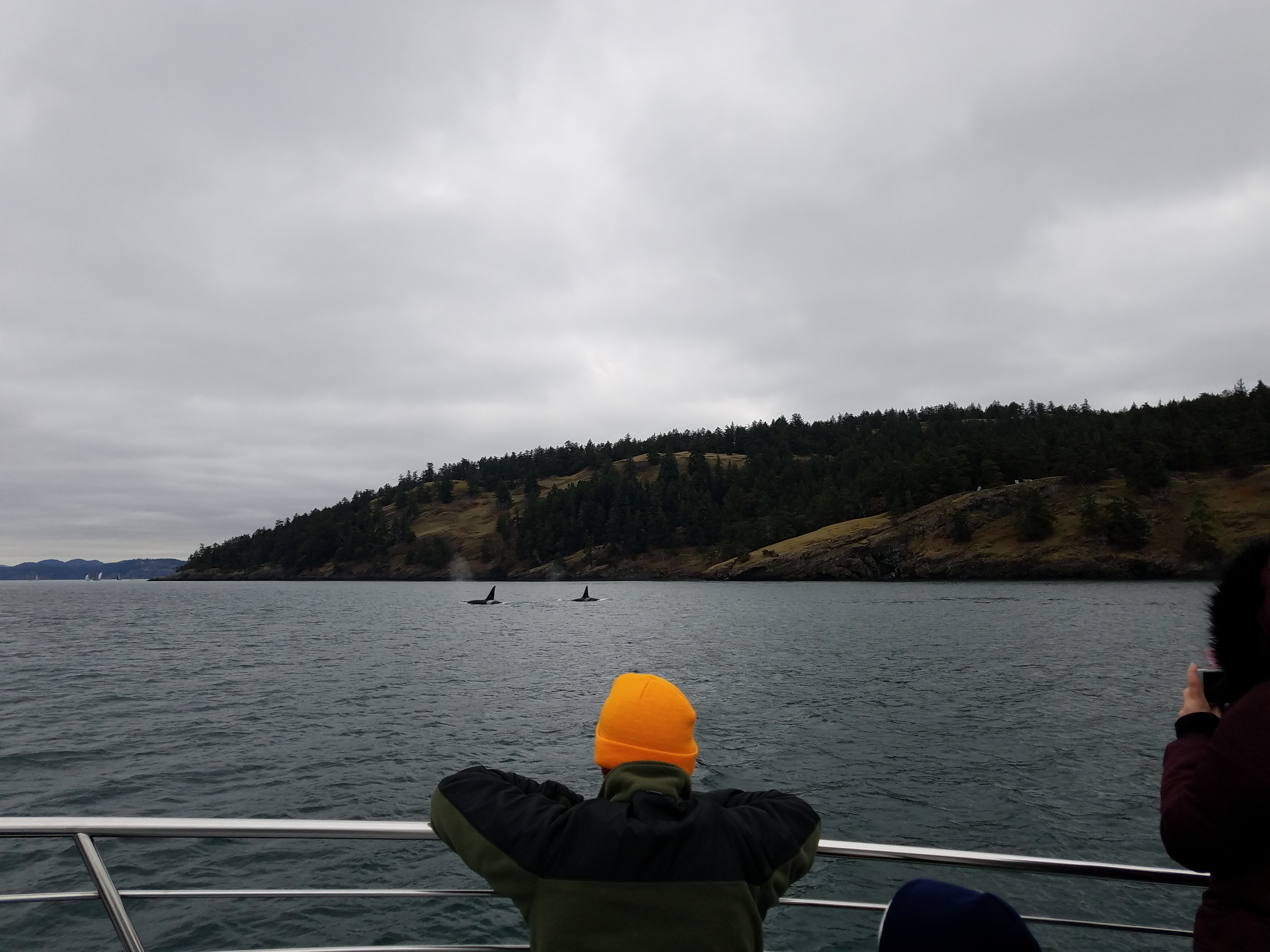 The T101's: Mama orca and her boys explore the Salish Sea