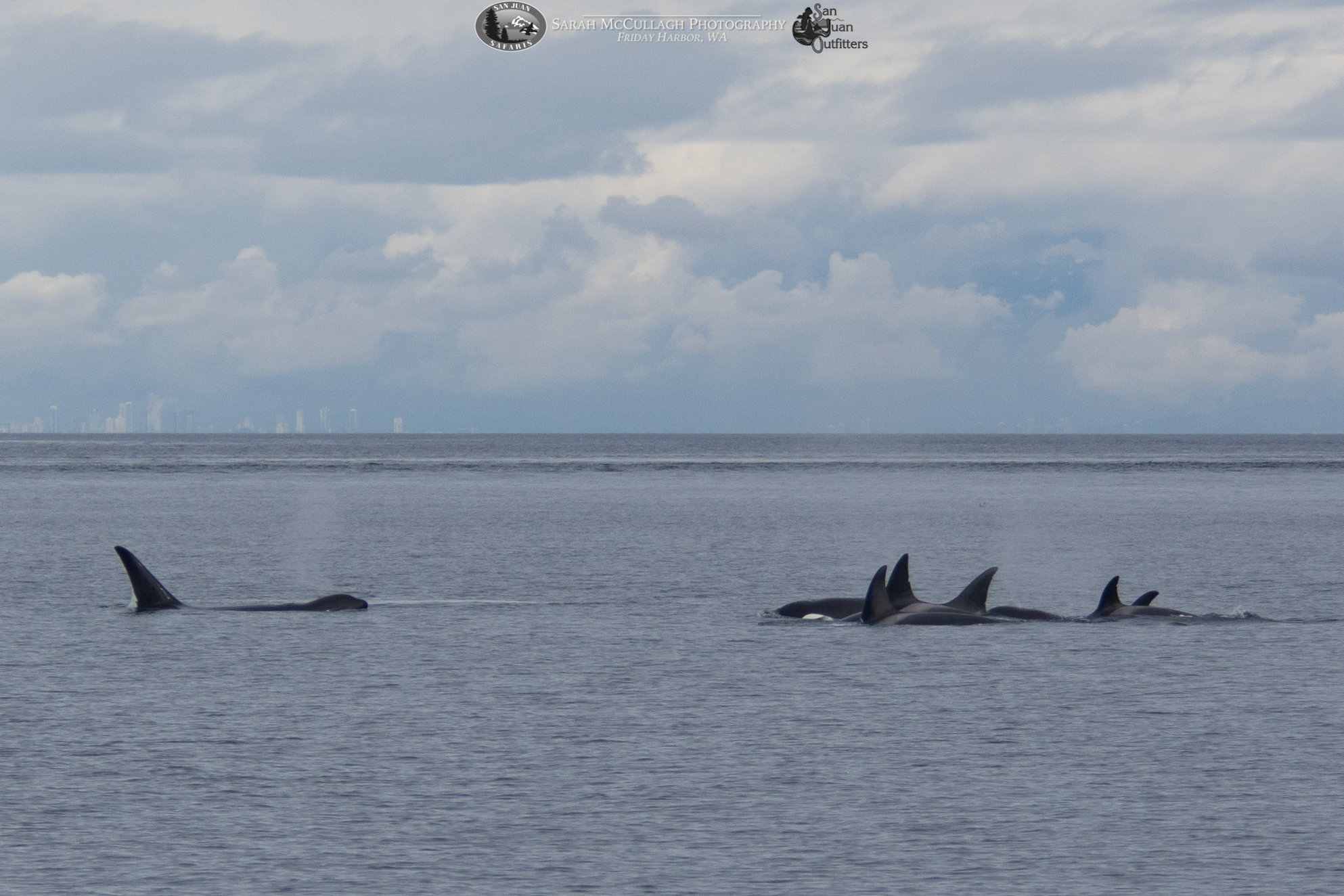 Beautiful Evening full of whales and lighthouses!
