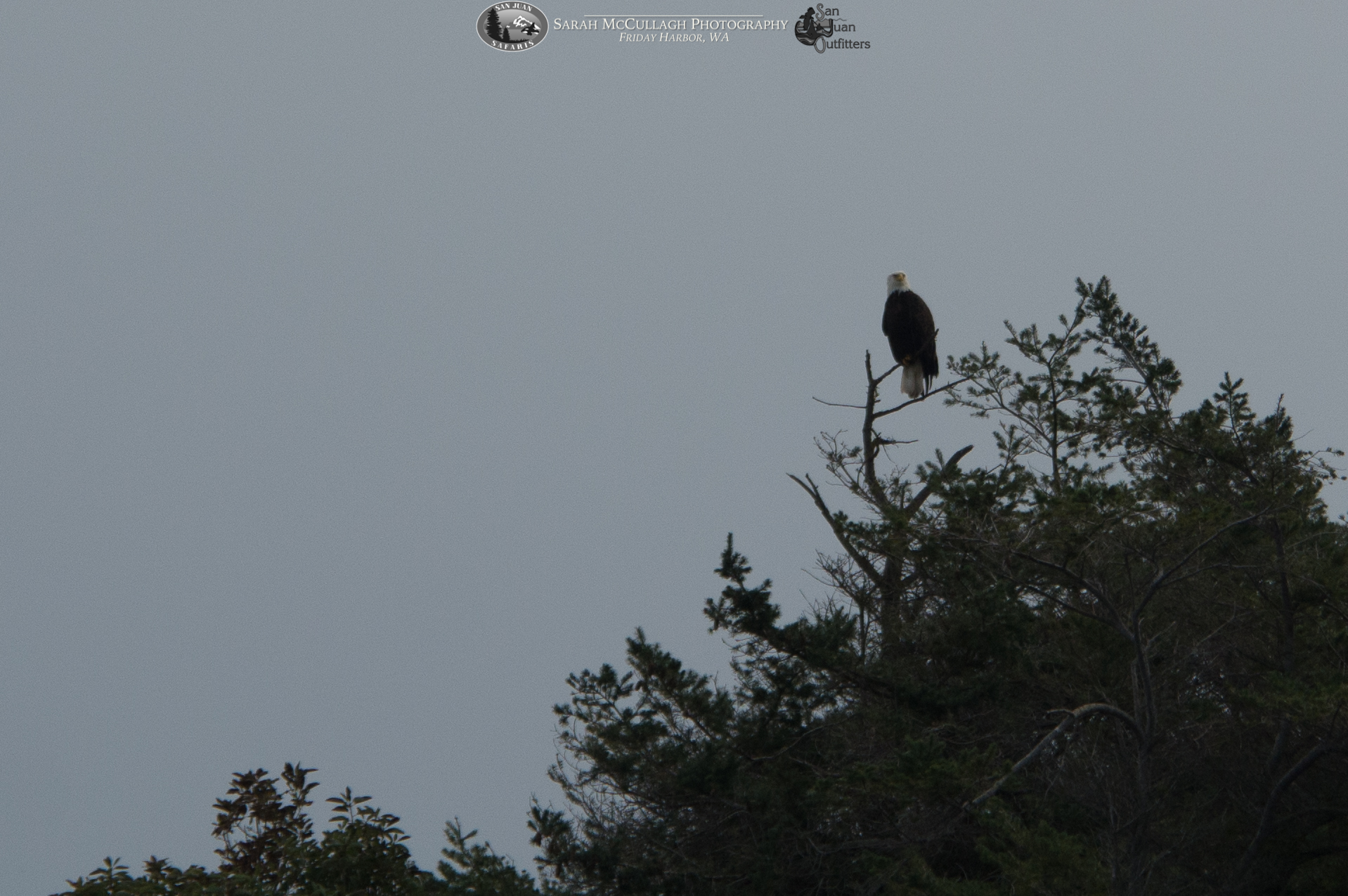 Wildlife Abounds in the San Juan and Southern Gulf Islands